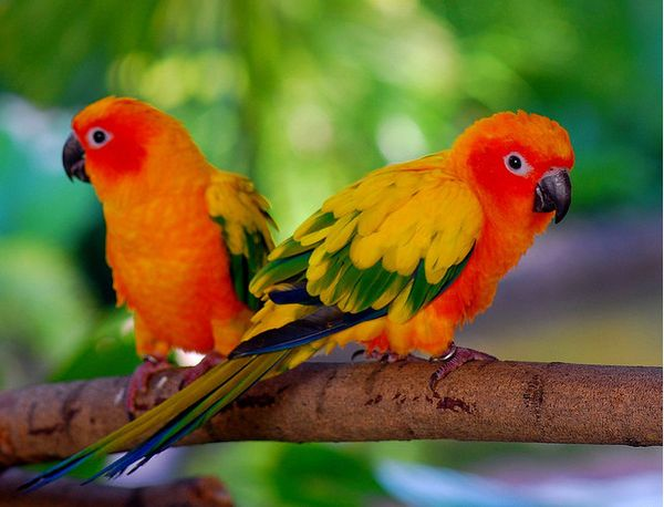 Best-Collection-Of-The-Cutest-Birds