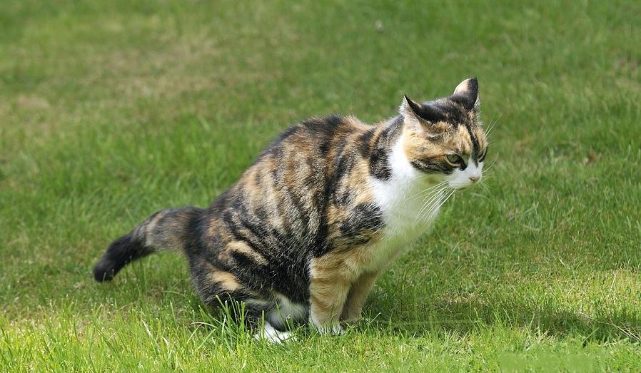 Cat-Urine-Smell