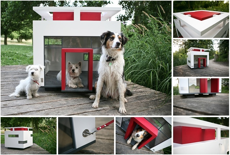 Compelling-features-of-the-best-dogs-for-small-homes