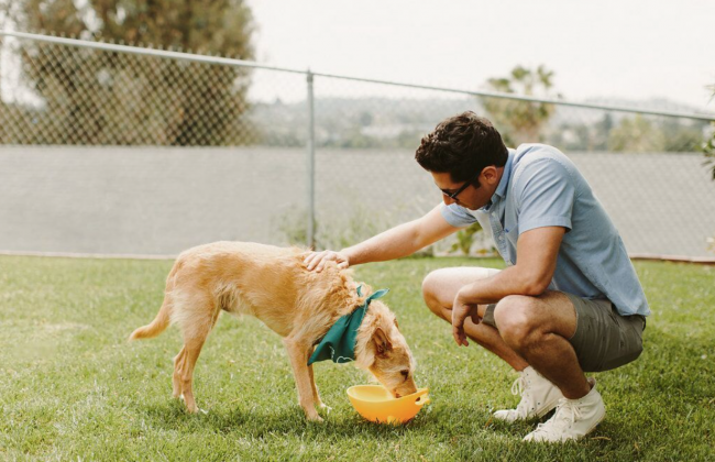 Super-ways-to-treat-your-pet-dog-well