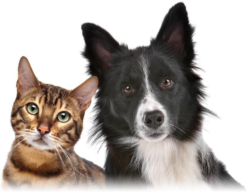 best-pet-insurance