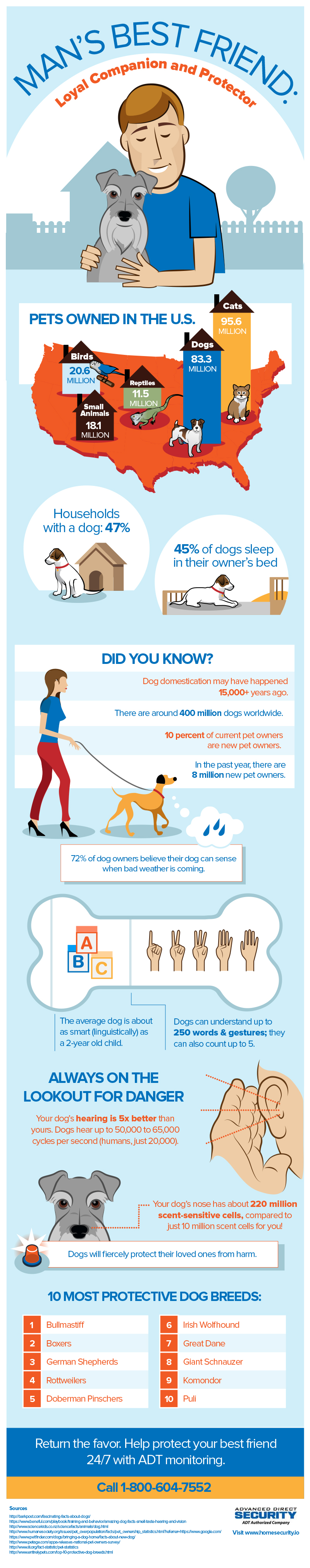 Dog-Infographic-final2