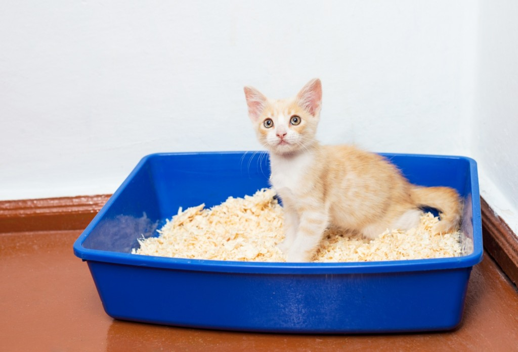 Show your cat the location of the litter box