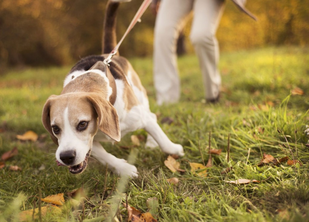 health dangers for dogs