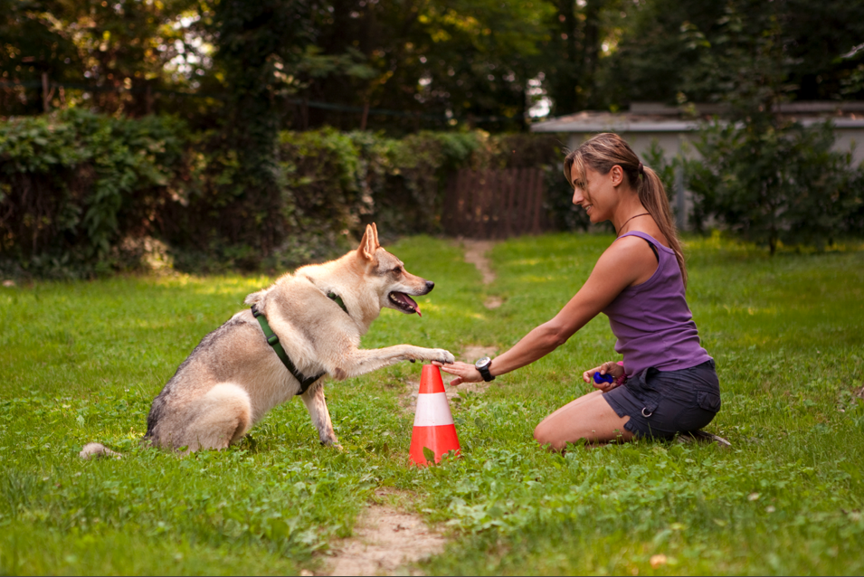 Learn-The-Best-Method-Of-Dog-Training