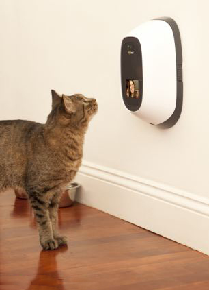 CCTV-Cameras-work-for-the-pets-safety