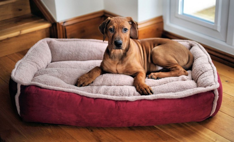 best-dog-bed